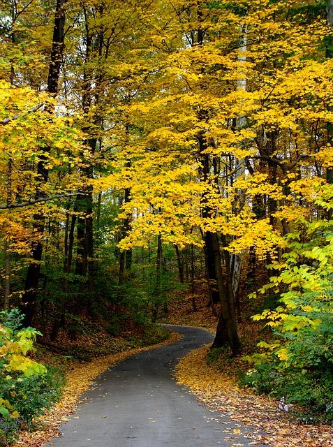 autumn-744270_640